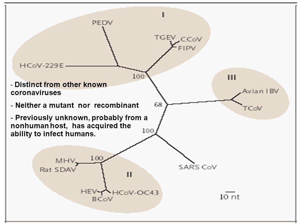 - Distinct from other known coronaviruses - Neither a mutant nor recombinant - Previously unknown, probably from a nonhuman host, has acquired the abi