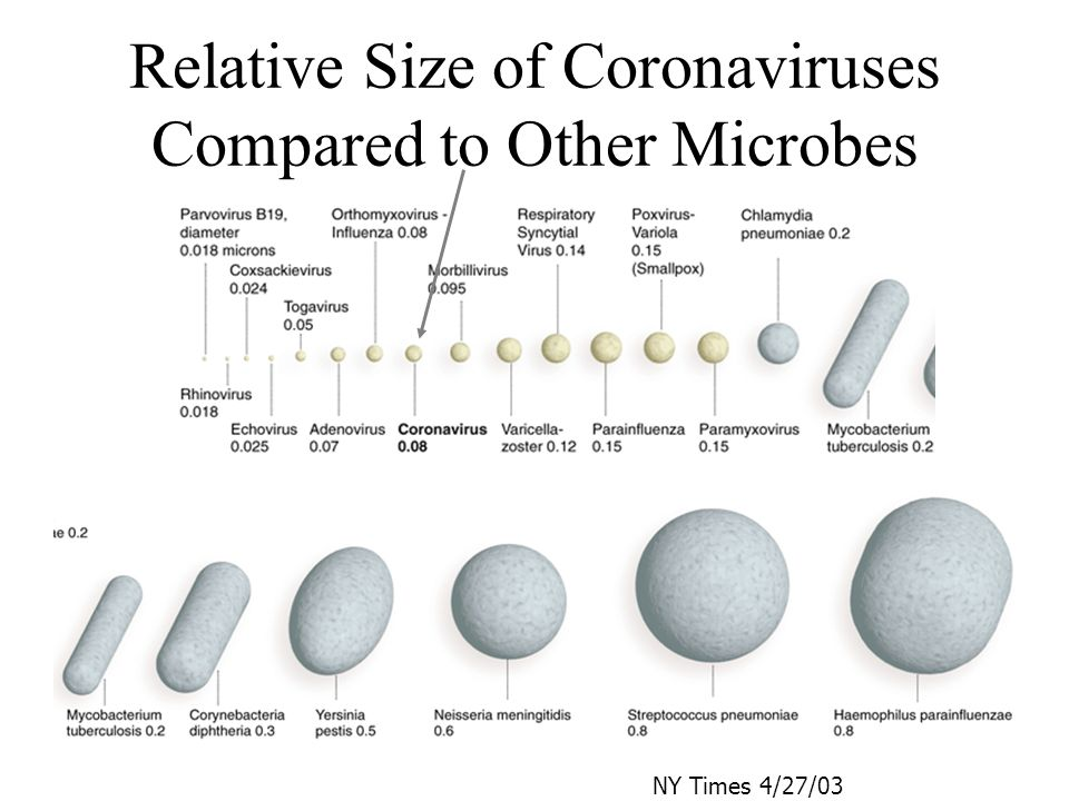 Relative Size of Coronaviruses Compared to Other Microbes NY Times 4/27/03