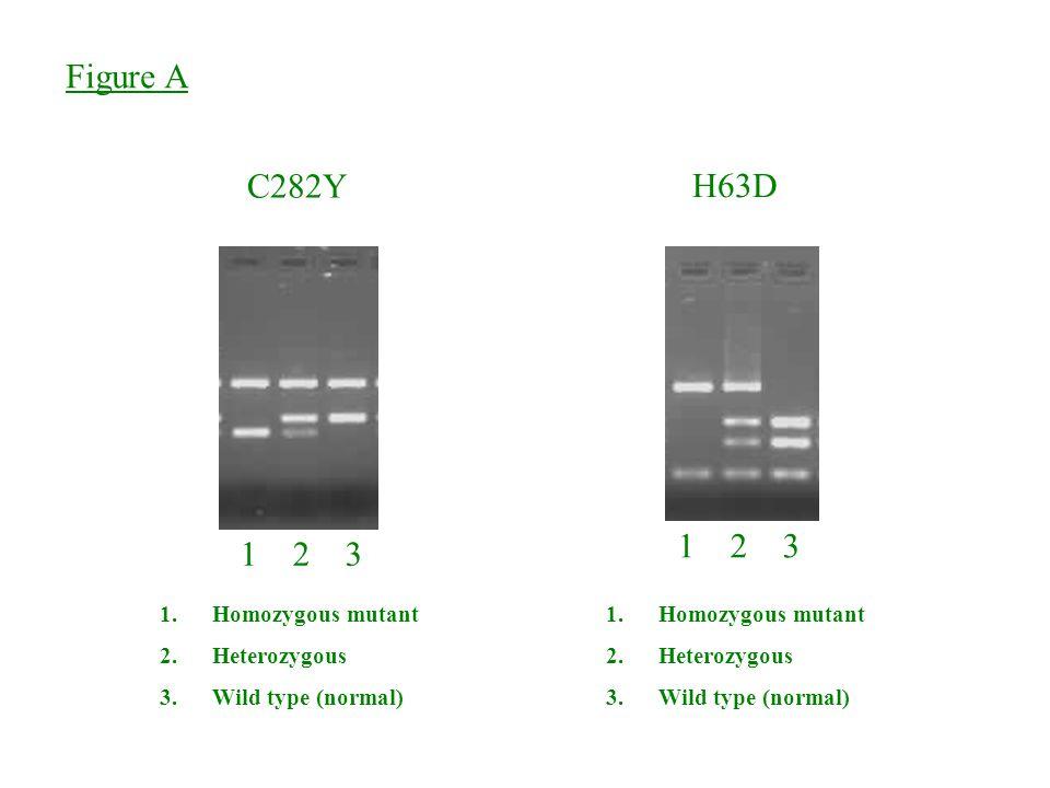 Figure A C282Y H63D 1 2 3 1.Homozygous mutant 2.Heterozygous 3.Wild type (normal) 1.Homozygous mutant 2.Heterozygous 3.Wild type (normal)