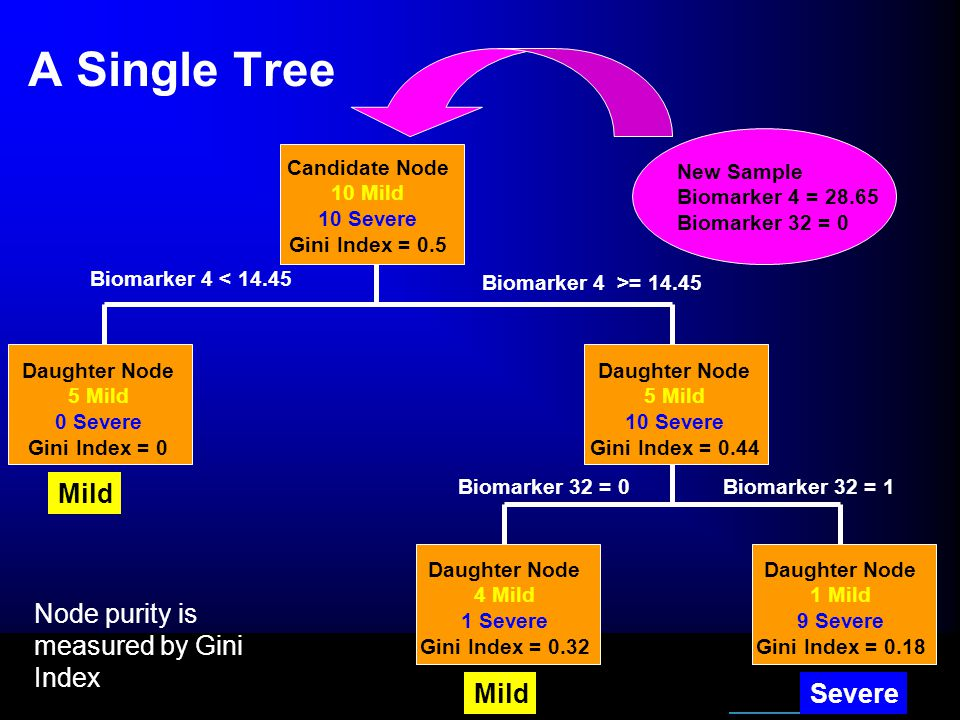 A Single Tree Candidate Node 10 Mild 10 Severe Gini Index = 0.5 Daughter Node 5 Mild 0 Severe Gini Index = 0 Biomarker 4 >= 14.45 Biomarker 4 < 14.45 Daughter Node 5 Mild 10 Severe Gini Index = 0.44 Mild Daughter Node 1 Mild 9 Severe Gini Index = 0.18 Daughter Node 4 Mild 1 Severe Gini Index = 0.32 MildSevere Biomarker 32 = 1Biomarker 32 = 0 Node purity is measured by Gini Index New Sample Biomarker 4 = 28.65 Biomarker 32 = 0