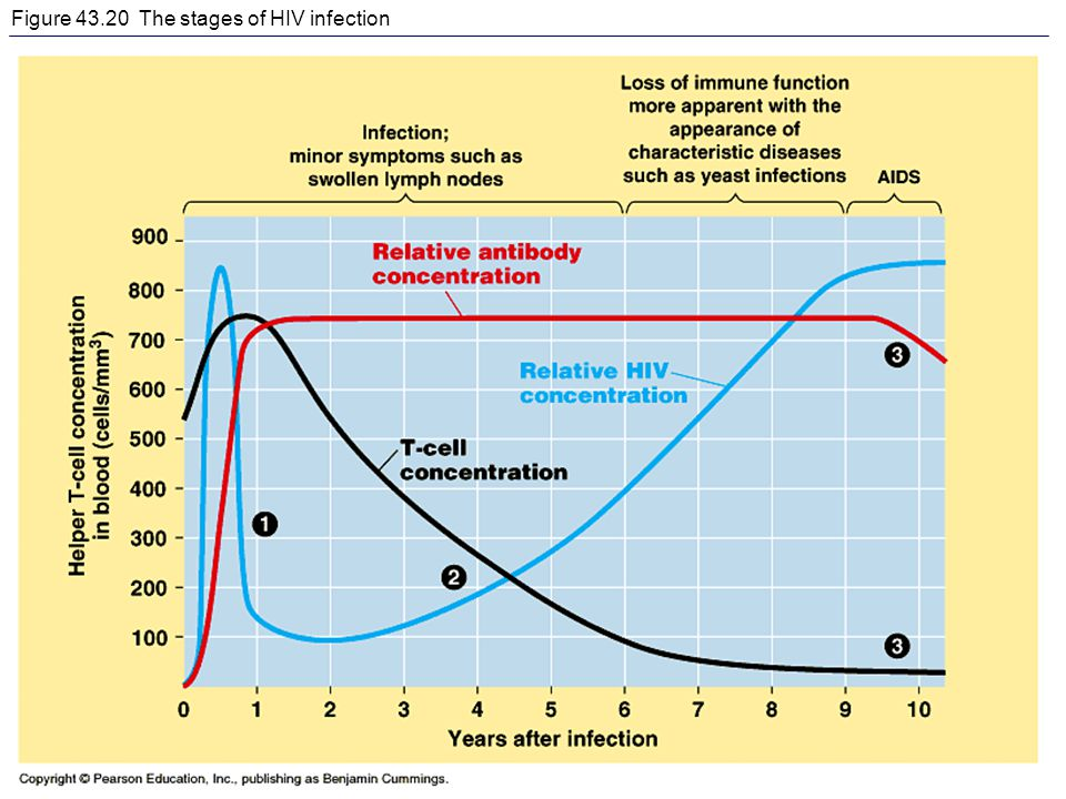Figure 43.20 The stages of HIV infection