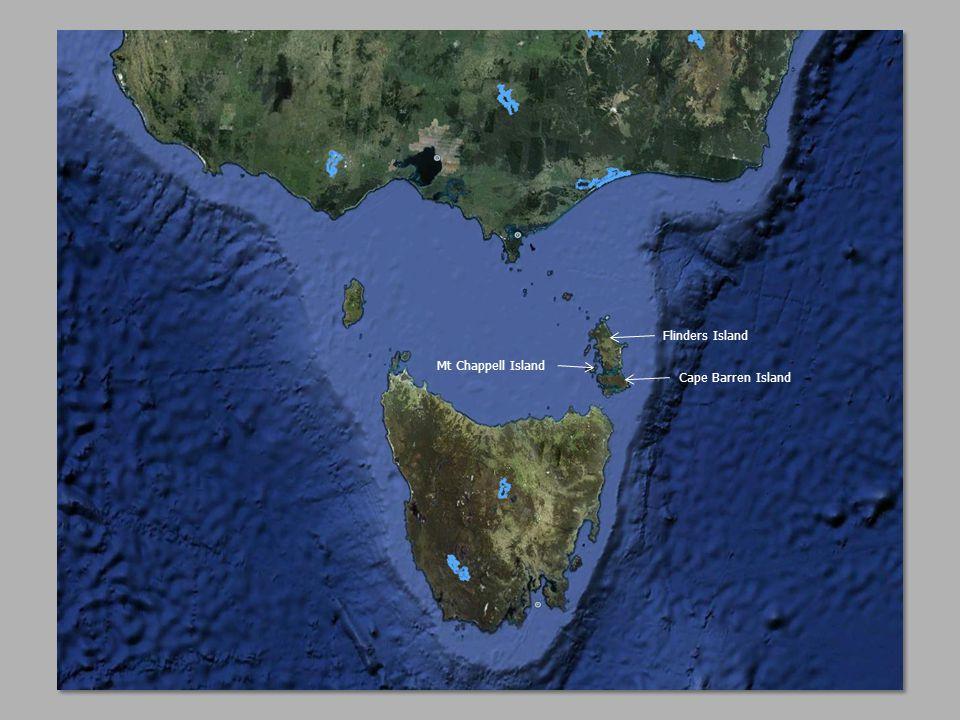 Mt Chappell Island Flinders Island Cape Barren Island
