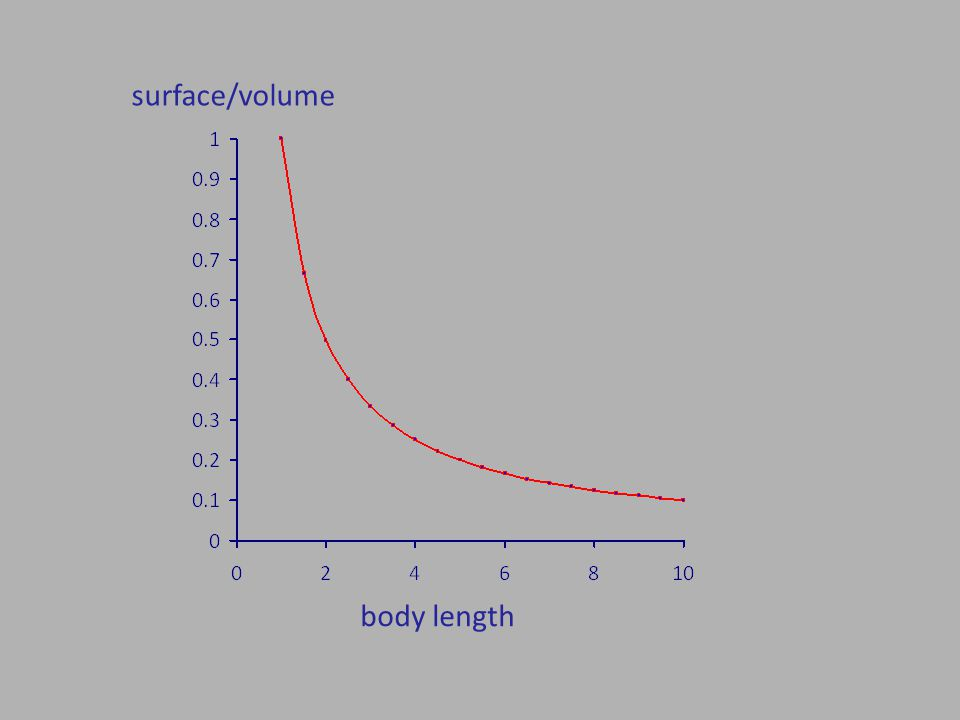 body length surface/volume