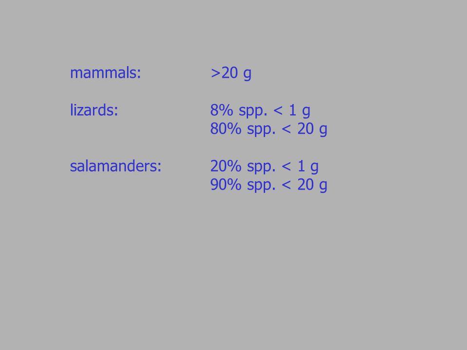 mammals: >20 g lizards:8% spp. < 1 g 80% spp. < 20 g salamanders: 20% spp. < 1 g 90% spp. < 20 g