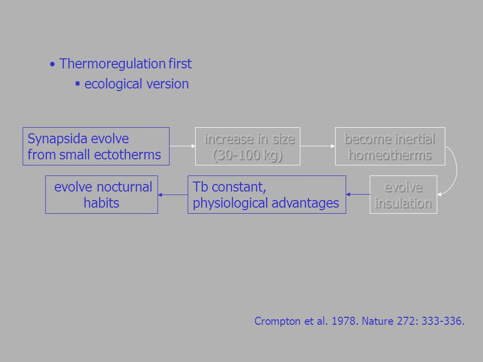 Thermoregulation first  ecological version Synapsida evolve from small ectotherms Tb constant, physiological advantages evolve nocturnal habits Crompton et al.