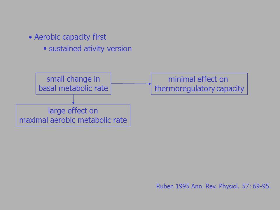 Aerobic capacity first  sustained ativity version Ruben 1995 Ann.