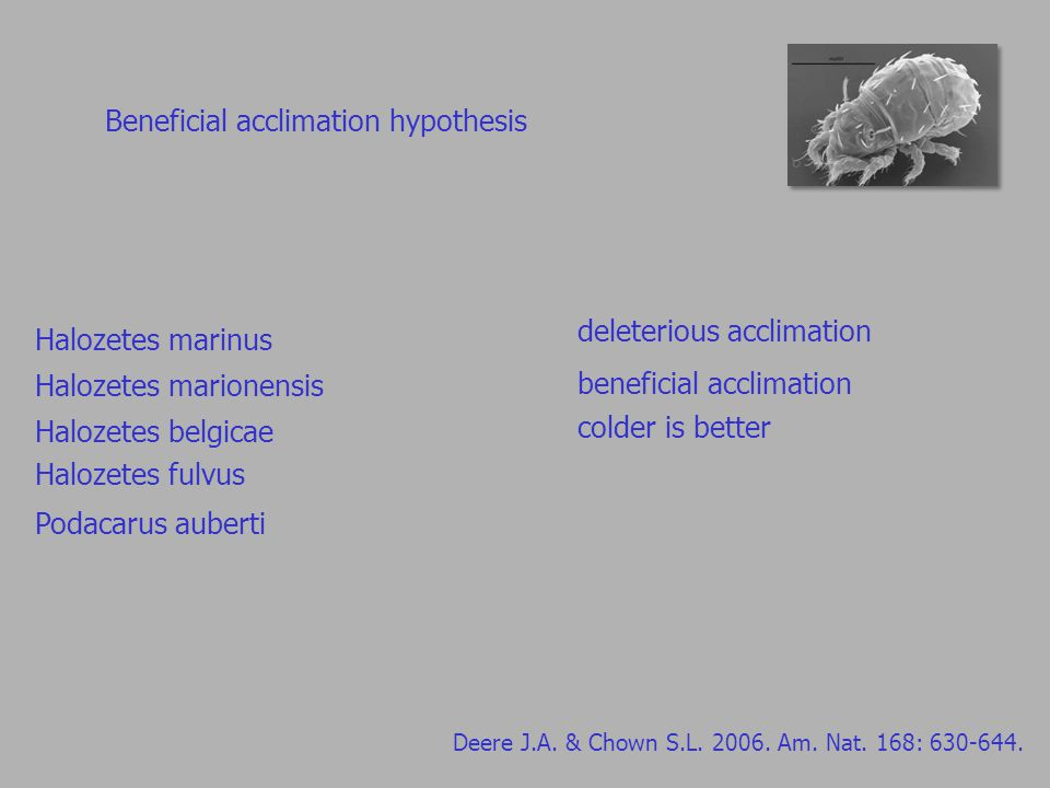 Beneficial acclimation hypothesis Deere J.A. & Chown S.L.
