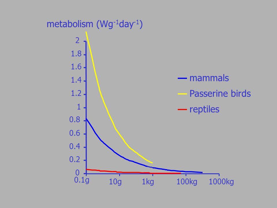 0 0.2 0.4 0.6 0.8 1 1.2 1.4 1.6 1.8 2 mammals Passerine birds reptiles metabolism (Wg -1 day -1 ) 0.1g 10g 1kg100kg1000kg