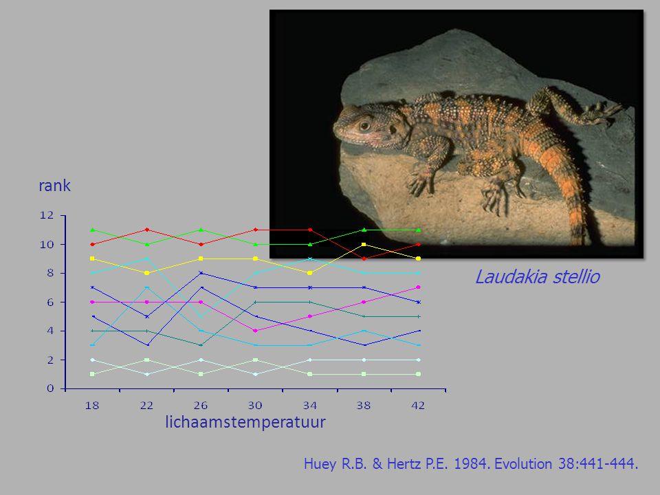 Laudakia stellio lichaamstemperatuur rank Huey R.B. & Hertz P.E. 1984. Evolution 38:441-444.