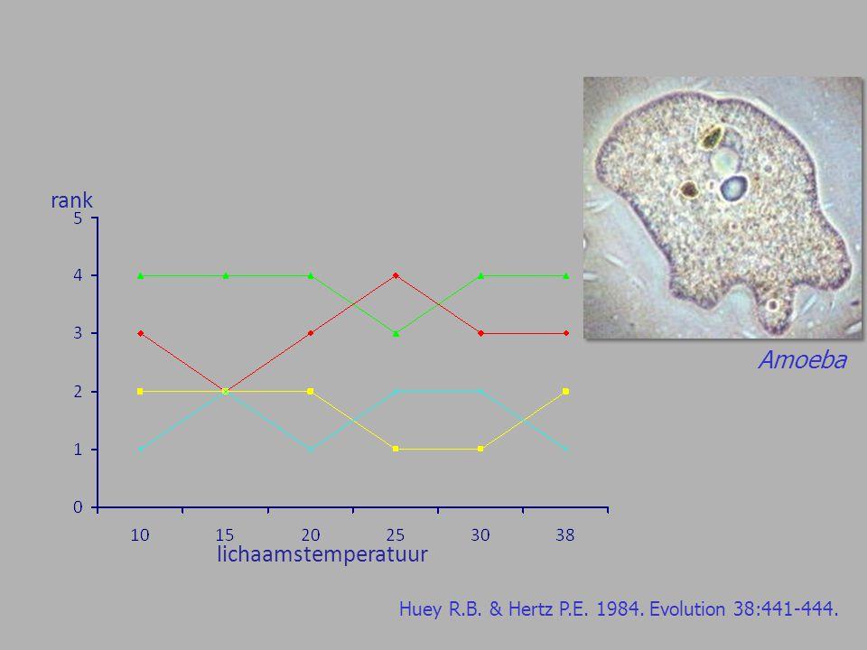 Amoeba lichaamstemperatuur rank