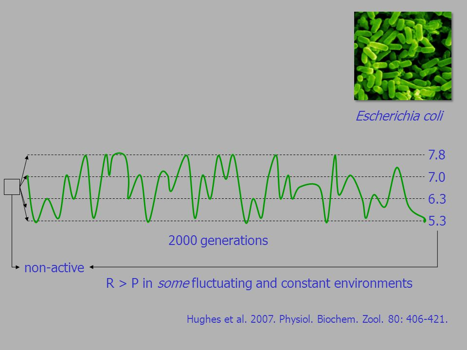 Escherichia coli Hughes et al. 2007. Physiol. Biochem.