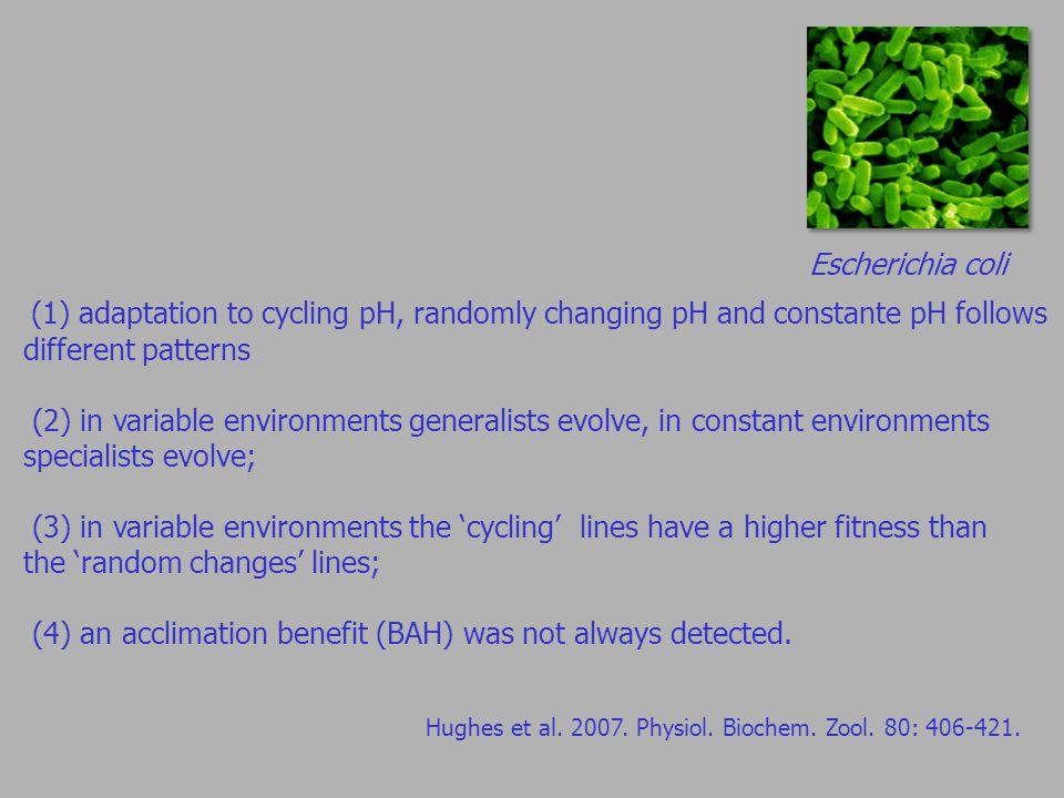 Escherichia coli Hughes et al.2007. Physiol. Biochem.