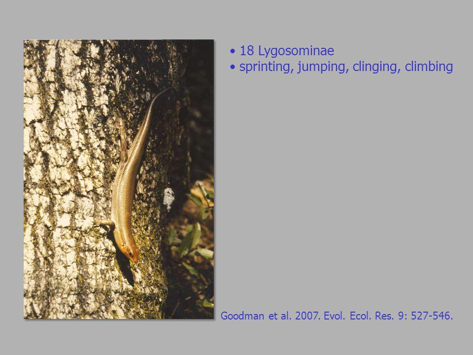 Goodman et al. 2007. Evol. Ecol. Res. 9: 527-546.