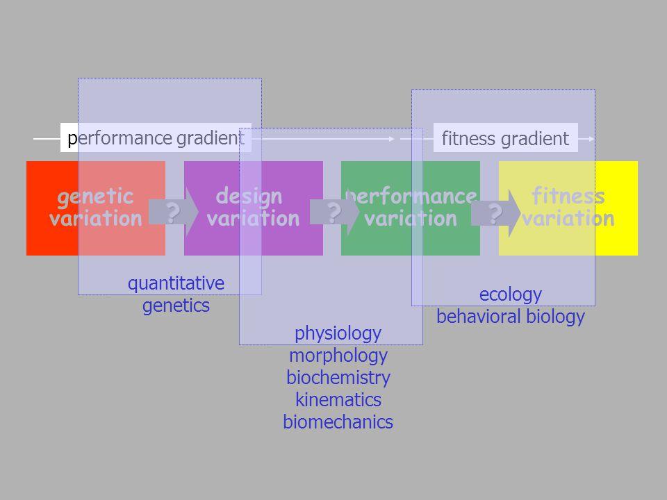 performance variation fitness variation design variation genetic variation performance gradient fitness gradient quantitative genetics physiology morp