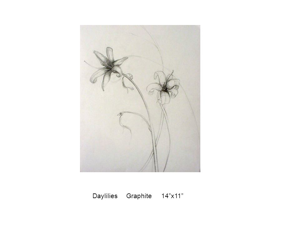 "Daylilies Graphite 14""x11"""
