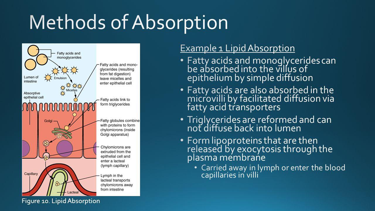 Figure 10. Lipid Absorption