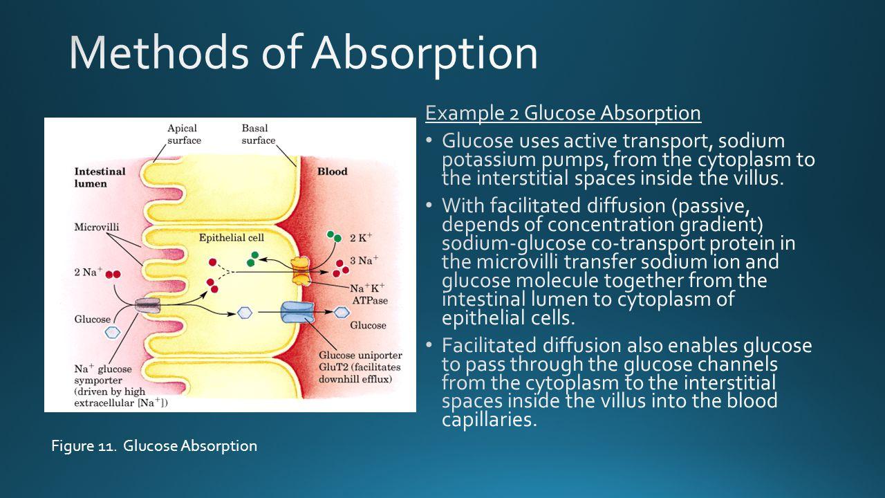 Figure 11. Glucose Absorption