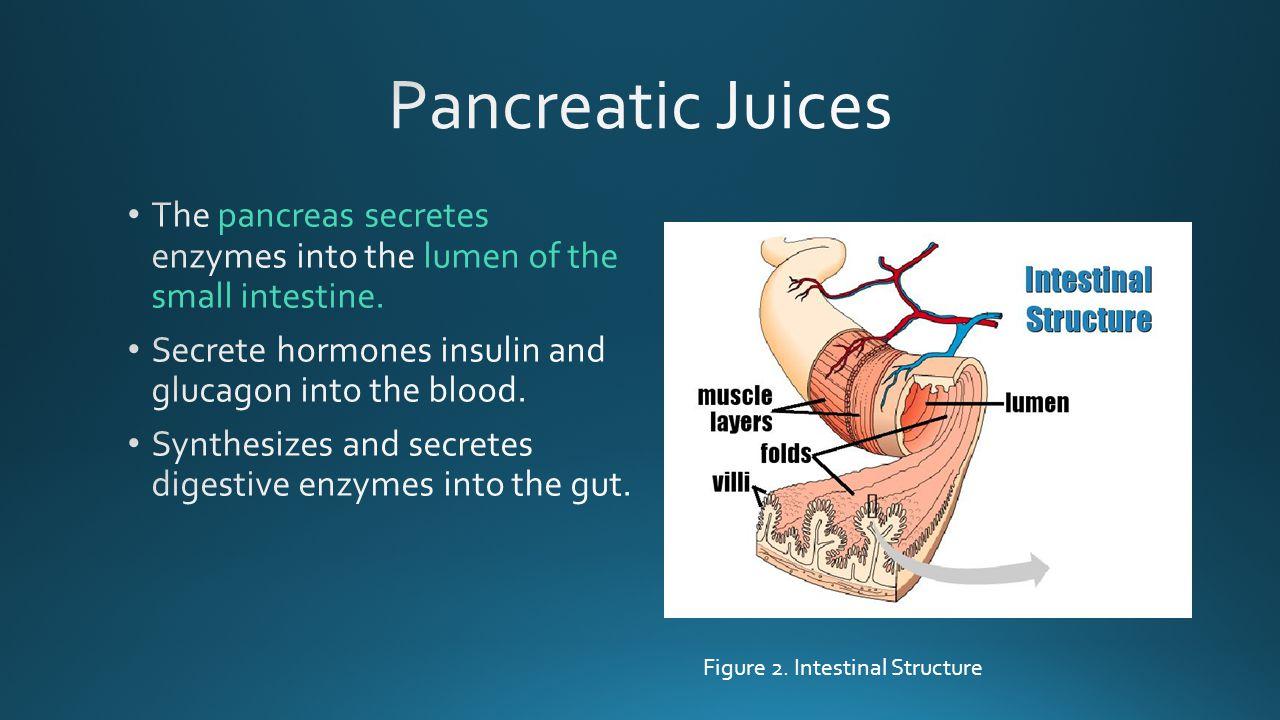 Figure 2. Intestinal Structure