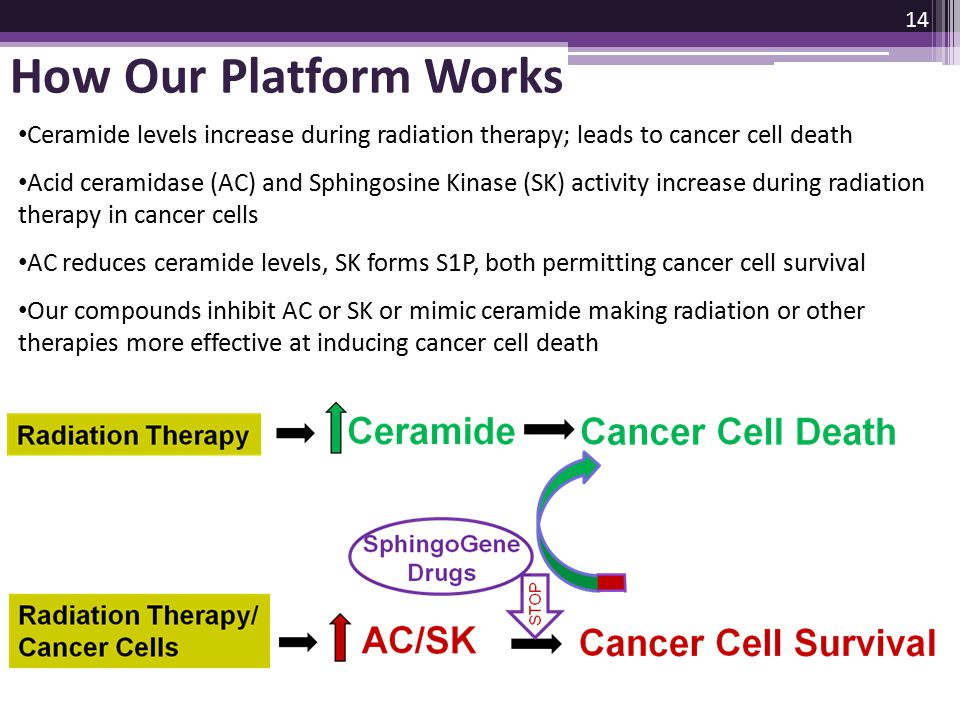 How Our Platform Works Ceramide levels increase during radiation therapy; leads to cancer cell death Acid ceramidase (AC) and Sphingosine Kinase (SK)