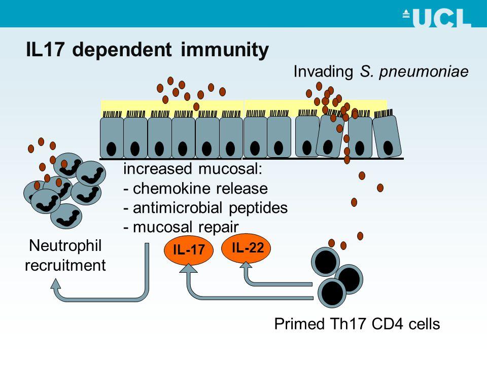 IL17 dependent immunity IL-22 Invading S.