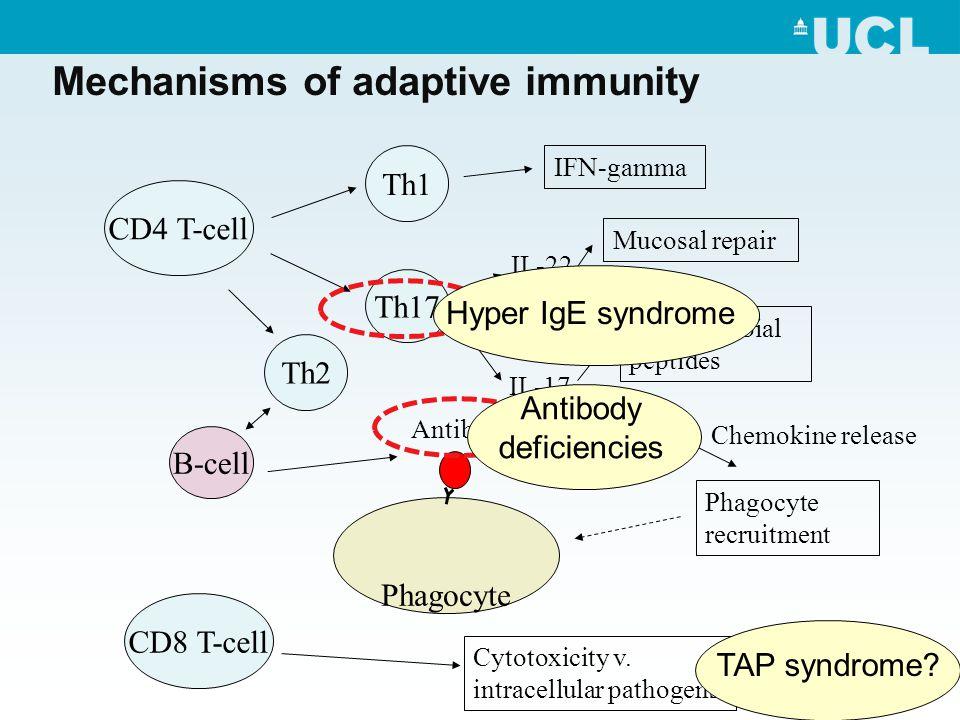 Mechanisms of adaptive immunity Th1 Th17 B-cell Antibody IFN-gamma IL-22 Mucosal repair Antimicrobial peptides Chemokine release Phagocyte recruitment IL-17 Phagocyte CD4 T-cell Th2 CD8 T-cell Cytotoxicity v.