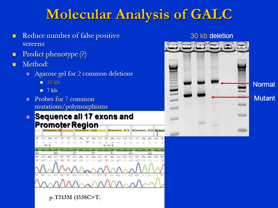 Molecular Analysis of GALC 30 kb deletion Normal Mutant Reduce number of false positive screens Reduce number of false positive screens Predict phenot