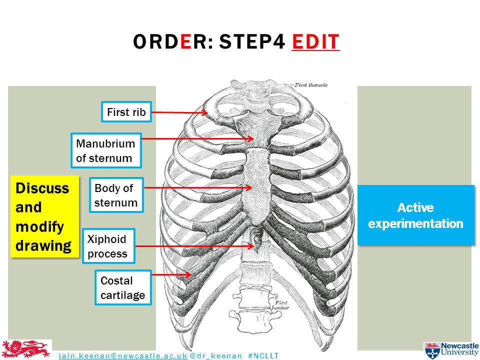 ORDER: STEP4 EDIT First rib Body of sternum Costal cartilage Manubrium of sternum Xiphoid process iain.keenan@newcastle.ac.uk @dr_keenan #NCLLT Discuss and modify drawing Discuss and modify drawing Active experimentation