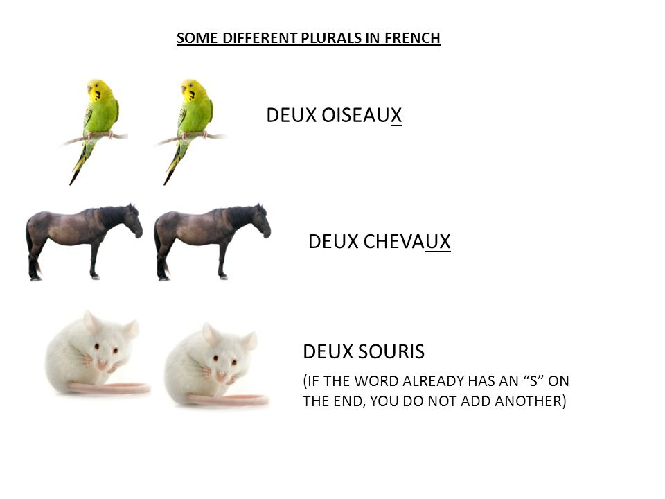 """SOME DIFFERENT PLURALS IN FRENCH DEUX OISEAUX DEUX CHEVAUX DEUX SOURIS (IF THE WORD ALREADY HAS AN """"S"""" ON THE END, YOU DO NOT ADD ANOTHER)"""