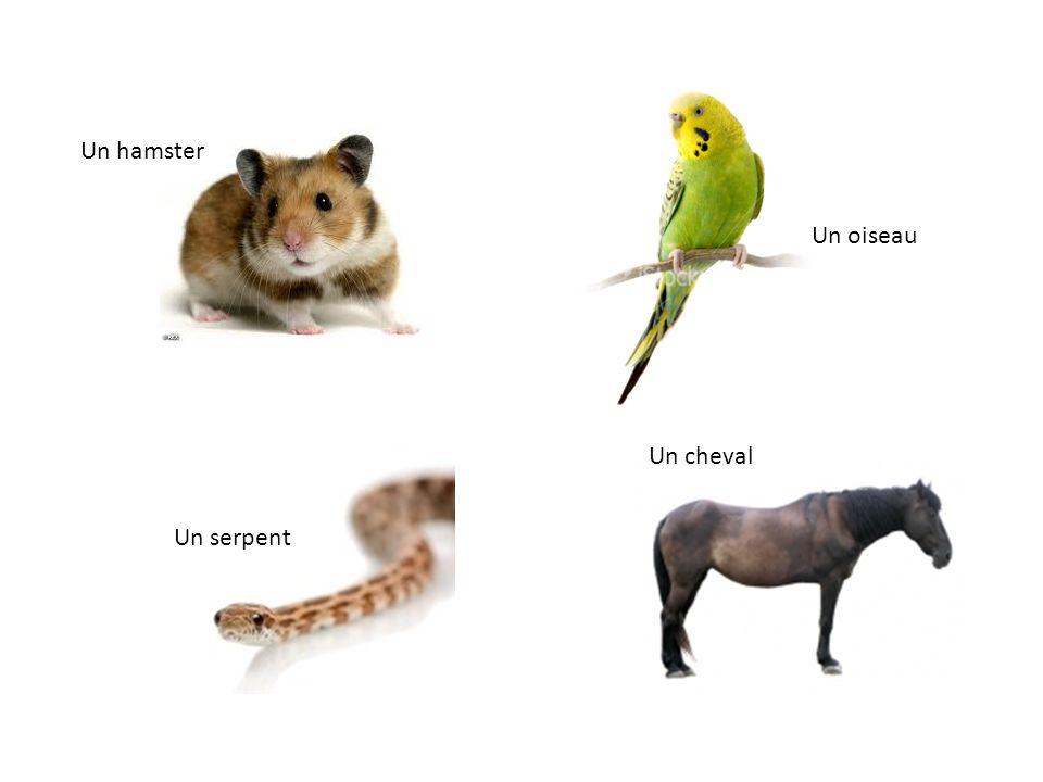 Un hamster Un oiseau Un serpent Un cheval