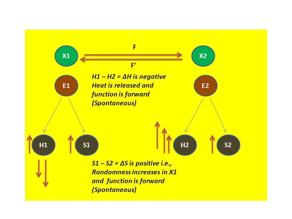 X1X2 E1 H1S1 E2 H2S2 S1 – S2 = ΔS is positive i.e., Randomness increases in X1 and function is forward (Spontaneous) H1 – H2 = ΔH is negative Heat is released and function is forward (Spontaneous) F F'