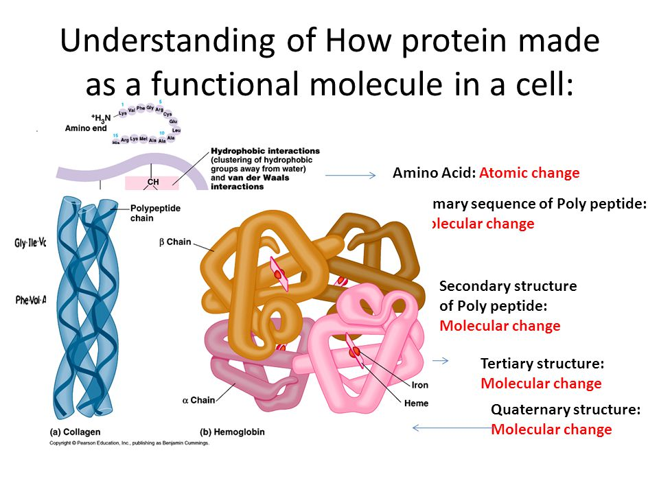 Understanding of How protein made as a functional molecule in a cell: Amino Acid: Atomic change Secondary structure of Poly peptide: Molecular change Primary sequence of Poly peptide: Molecular change Tertiary structure: Molecular change Quaternary structure: Molecular change