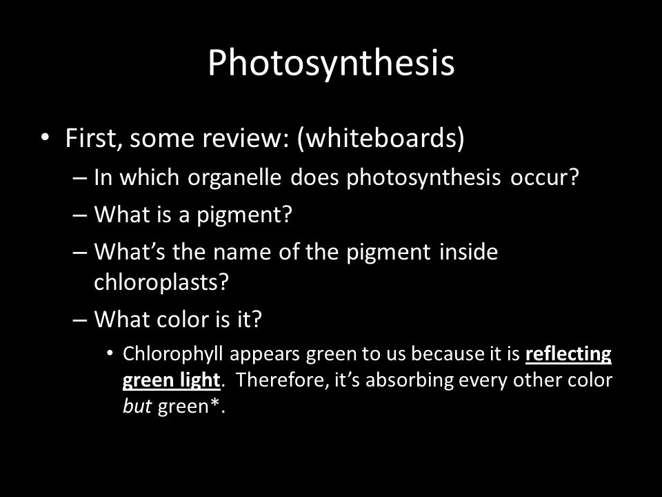 Photosynthesis First, some review: (whiteboards) – In which organelle does photosynthesis occur.