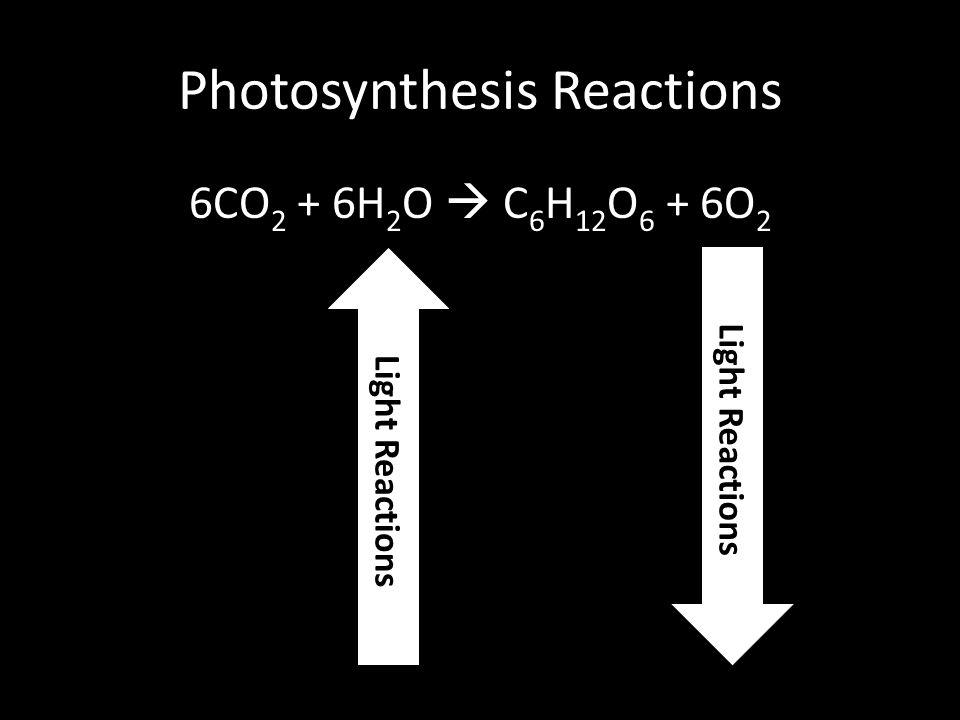 Photosynthesis Reactions 6CO 2 + 6H 2 O  C 6 H 12 O 6 + 6O 2 Light Reactions