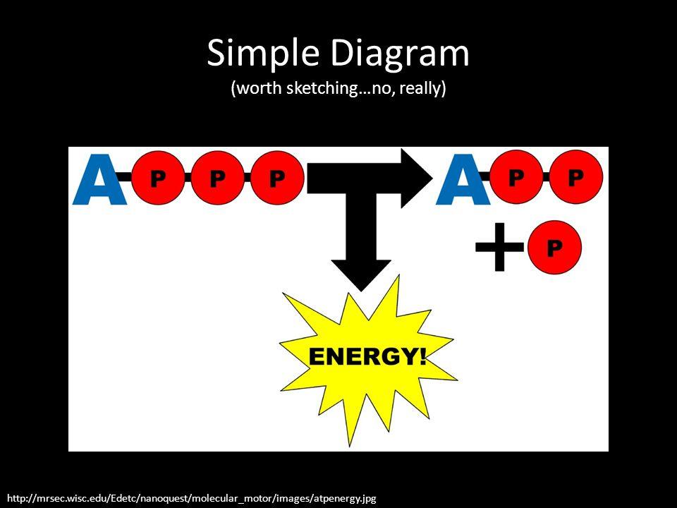 Simple Diagram (worth sketching…no, really) http://mrsec.wisc.edu/Edetc/nanoquest/molecular_motor/images/atpenergy.jpg