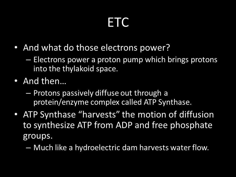 ETC And what do those electrons power.