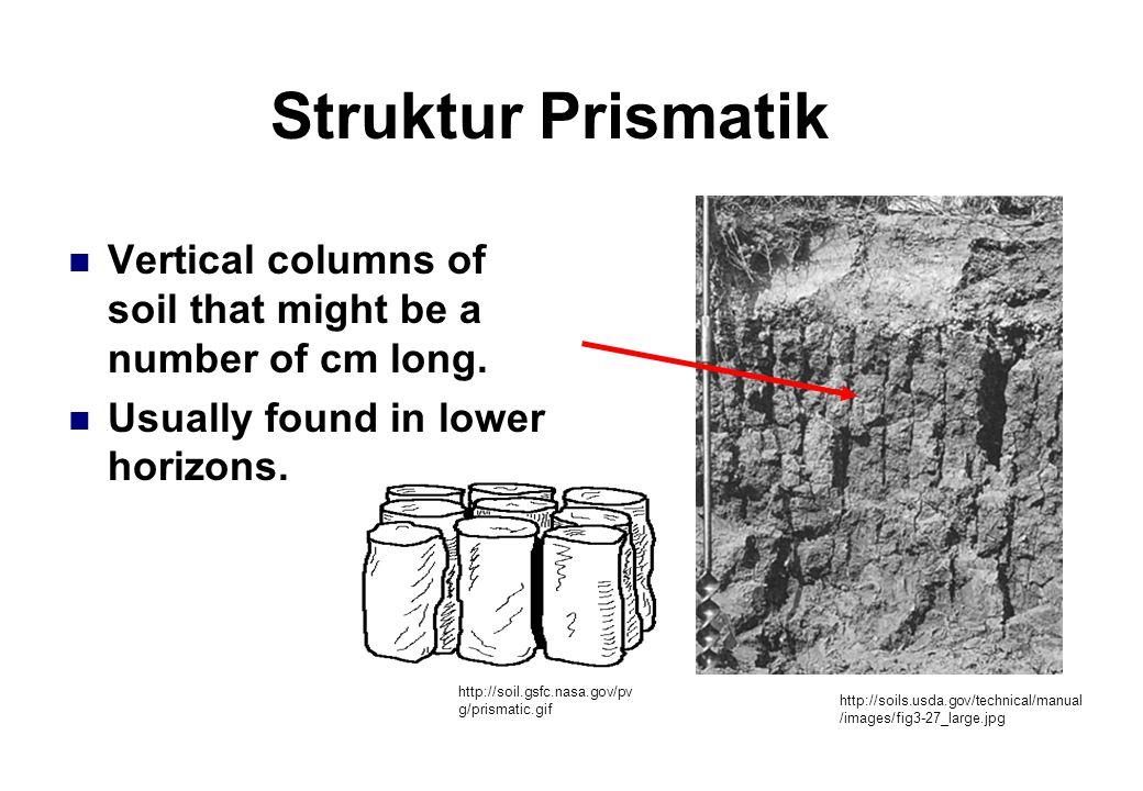 Struktur Prismatik Vertical columns of soil that might be a number of cm long.