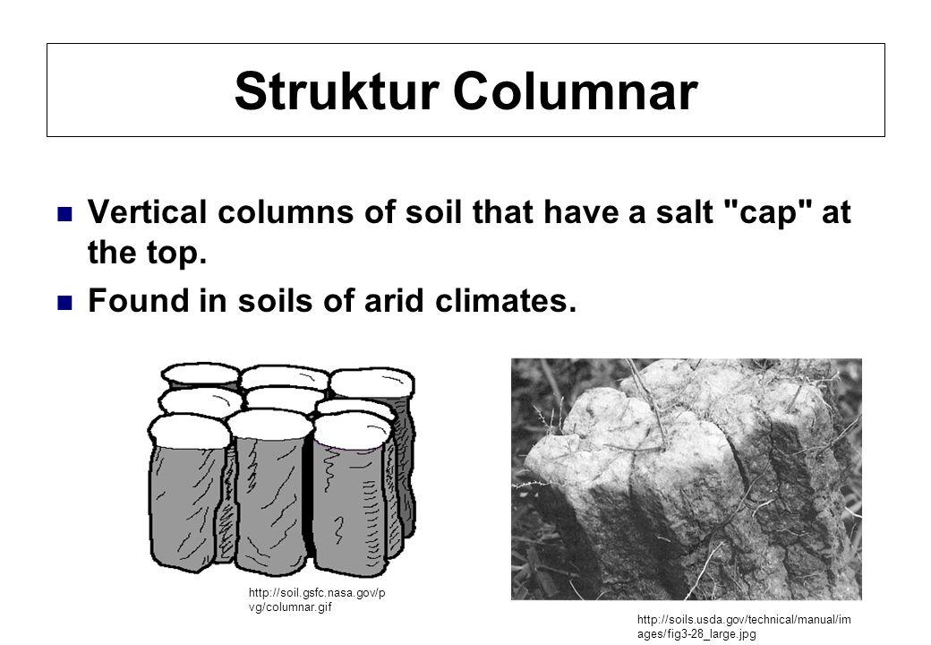 Struktur Columnar Vertical columns of soil that have a salt cap at the top.
