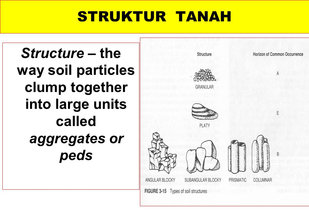STRUKTUR TANAH Structure – the way soil particles clump together into large units called aggregates or peds