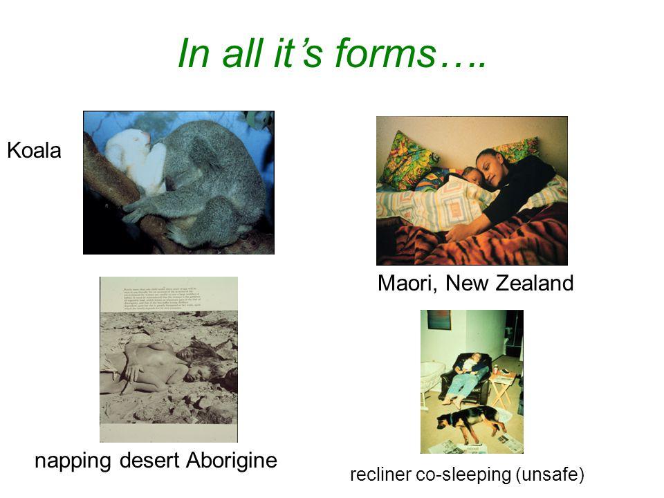 In all it's forms…. Maori, New Zealand recliner co-sleeping (unsafe) napping desert Aborigine Koala