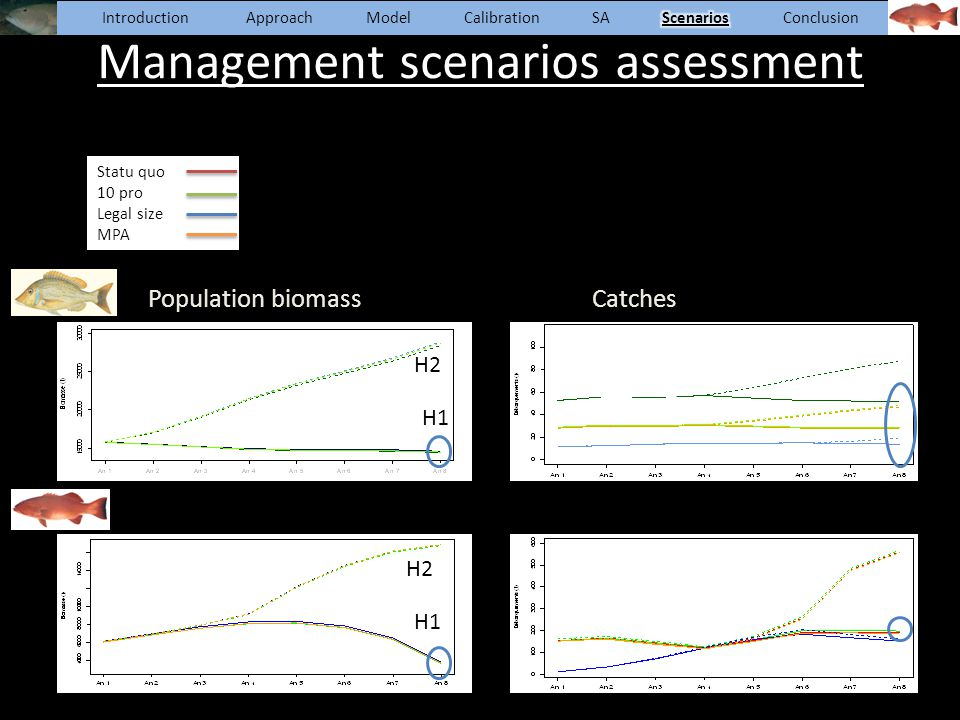Population biomassCatches Management scenarios assessment Statu quo 10 pro Legal size MPA H1 H2 H1 H2