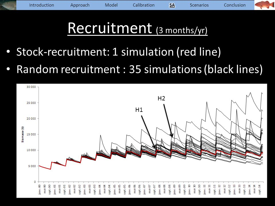 Recruitment (3 months/yr) Stock-recruitment: 1 simulation (red line) Random recruitment : 35 simulations (black lines) H1 H2