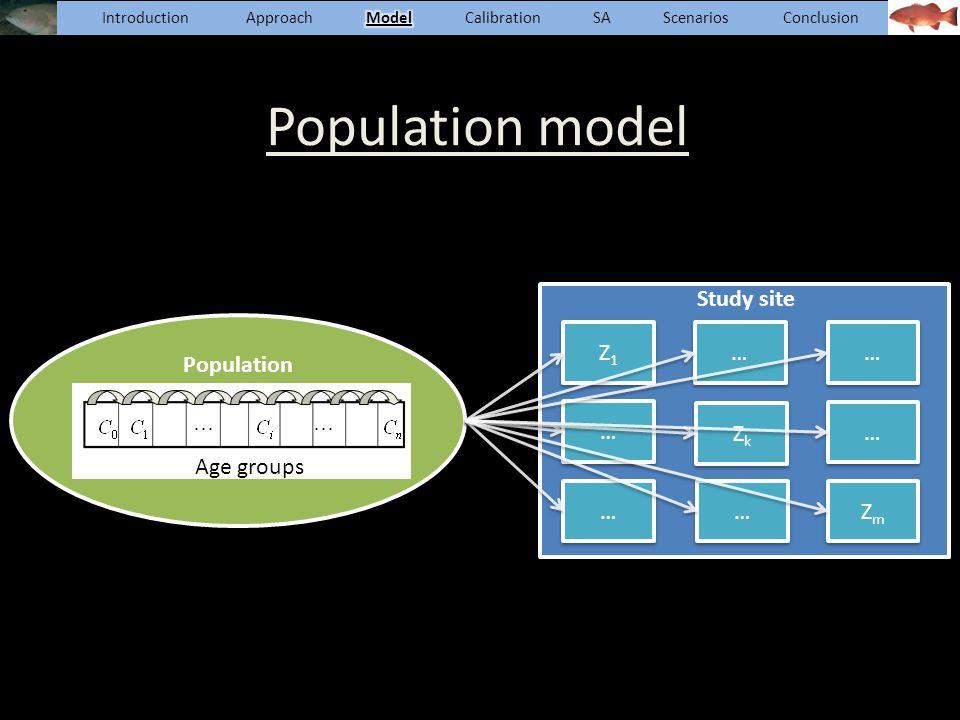 Population model Population Age groups Z1Z1 Z1Z1 … … … … ZkZk ZkZk … … … … ZmZm ZmZm … … … … Study site