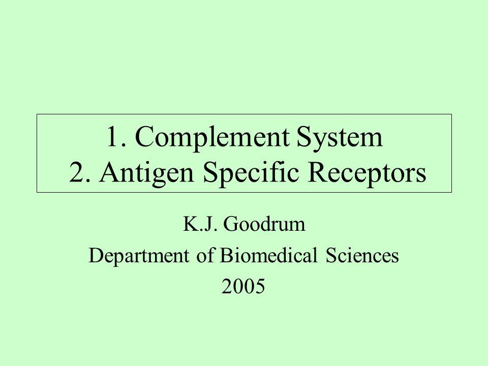 1. Complement System 2. Antigen Specific Receptors K.J. Goodrum Department of Biomedical Sciences 2005