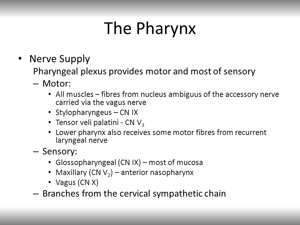 Nerve Supply Pharyngeal plexus provides motor and most of sensory – Motor: All muscles – fibres from nucleus ambiguus of the accessory nerve carried v