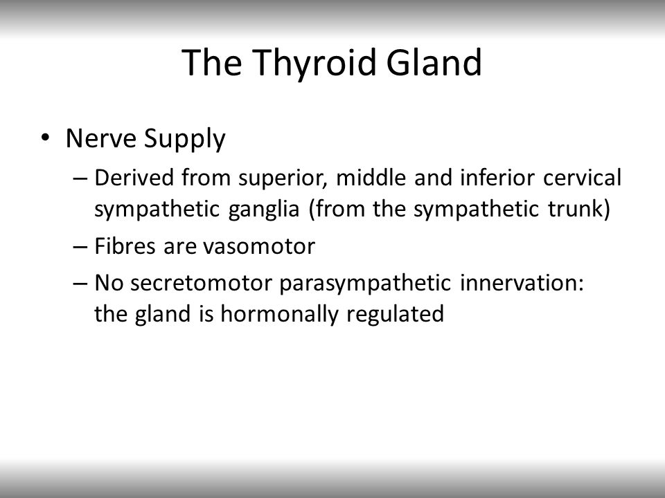 The Thyroid Gland Nerve Supply – Derived from superior, middle and inferior cervical sympathetic ganglia (from the sympathetic trunk) – Fibres are vasomotor – No secretomotor parasympathetic innervation: the gland is hormonally regulated