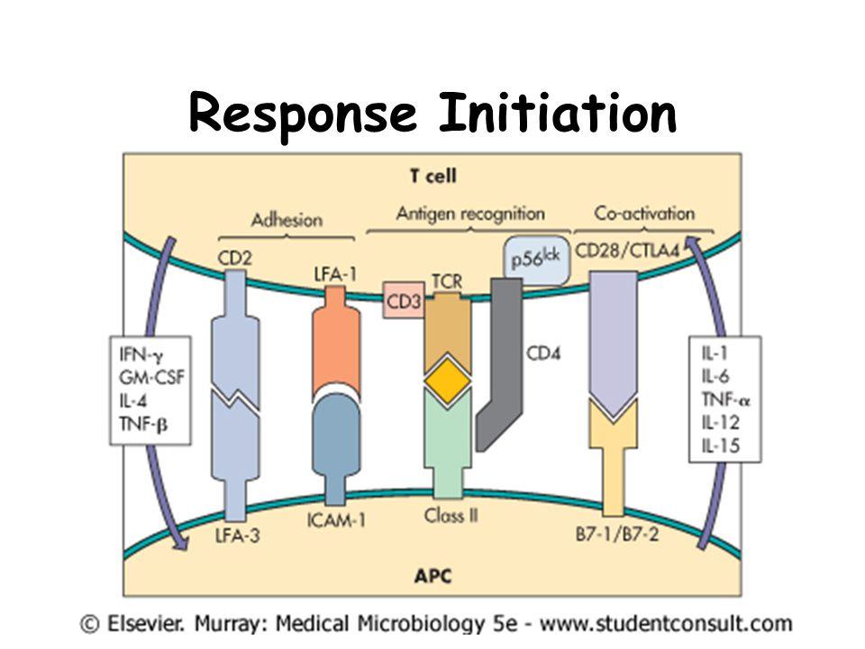 Immune System Dynamics Cellular Immunity Th1 Humoral Immunity Th2