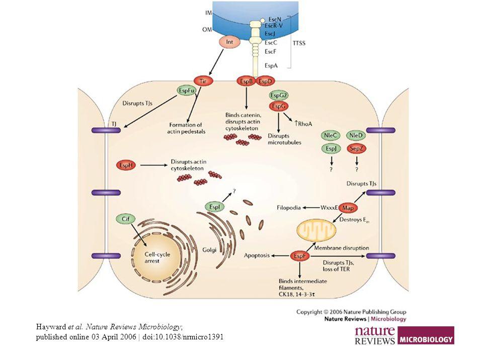 Hayward et al. Nature Reviews Microbiology; published online 03 April 2006 | doi:10.1038/nrmicro1391