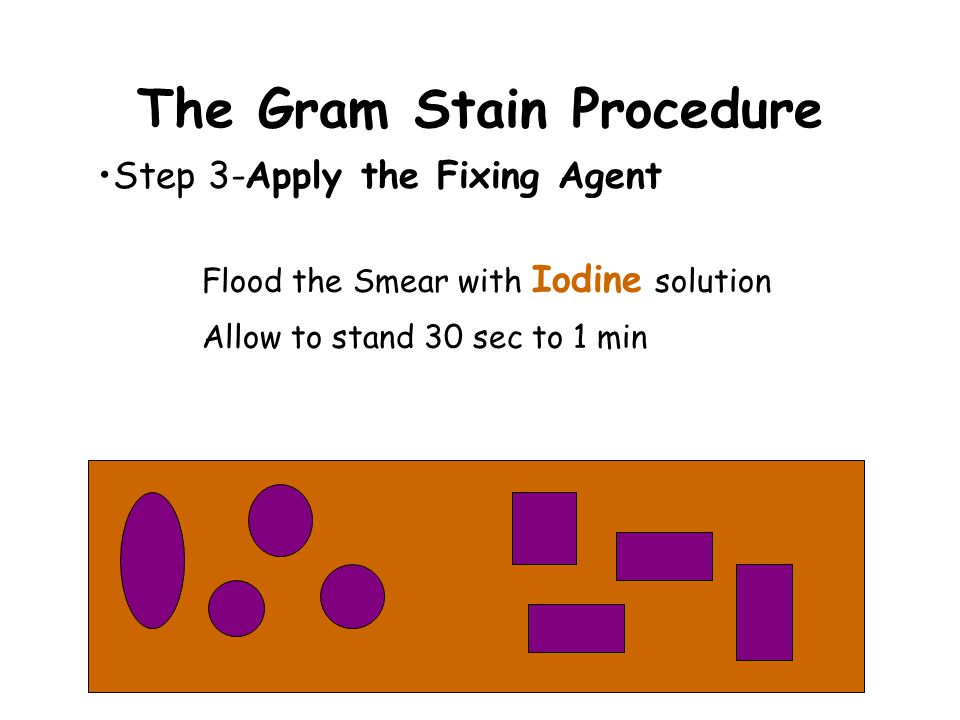 The Gram Stain Procedure Step 2-Apply the Primary Stain Flood the Smear with Crystal Violet Allow to stand 30 sec to 1 min Rinse with water to remove excess stain