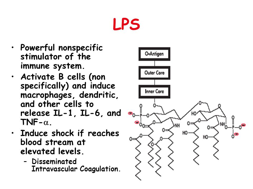 LPS LPS structure used to classify bacteria.