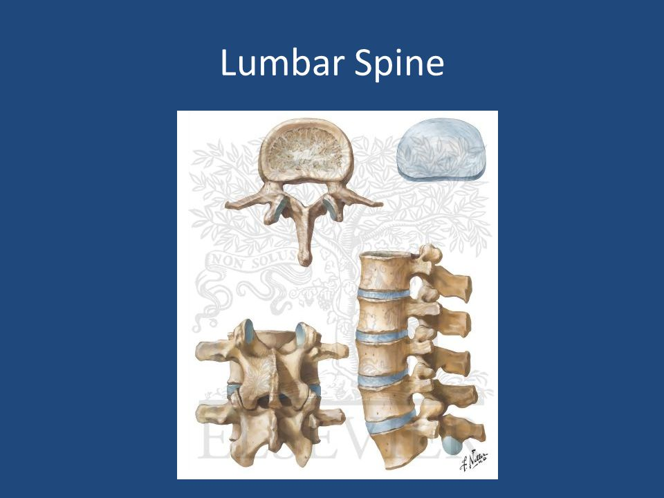 Imaging X-rays: – Cervical: 3 views AP, lateral and open mouth – Thoraco-lumbar: 2 views AP & lateral – Flexion-Extension views CT: best for bony anatomy MRI: best to evaluate soft tissue